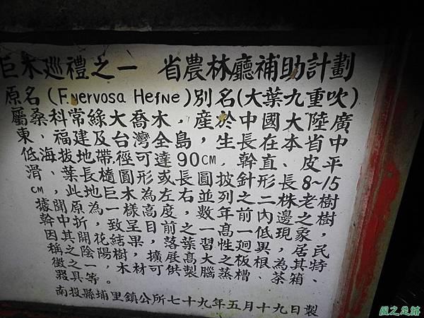 埔里九丁榕20160917(20)