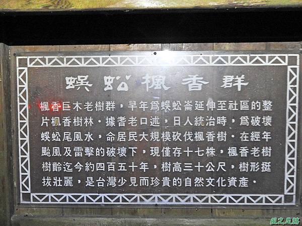 蜈蚣社區楓香老樹群20160917(11)