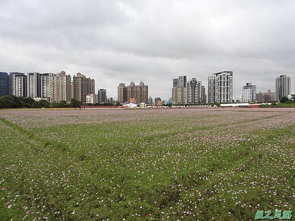 桃園花彩節中壢區20181215(2)