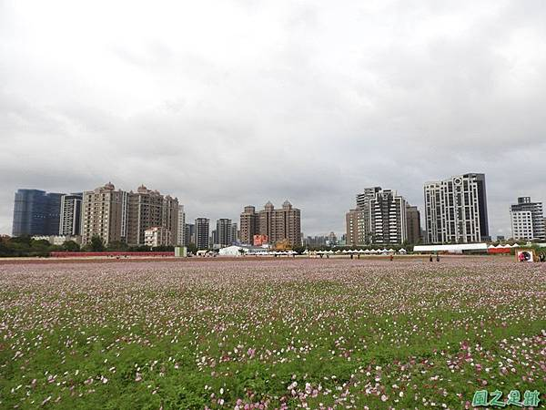 桃園花彩節中壢區20181215(5)