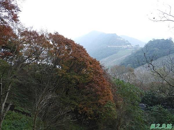 石門水庫賞楓20181222(62).JPG