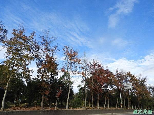 楓景20180101(3)