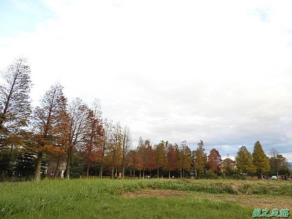 落羽松大道20190106(43)