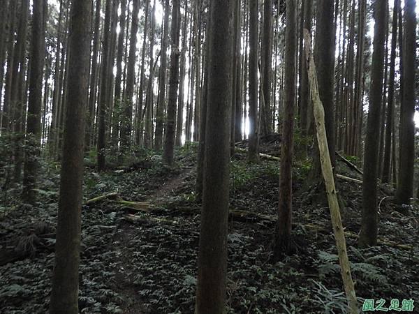 鳥嘴山南峰20190105(32)