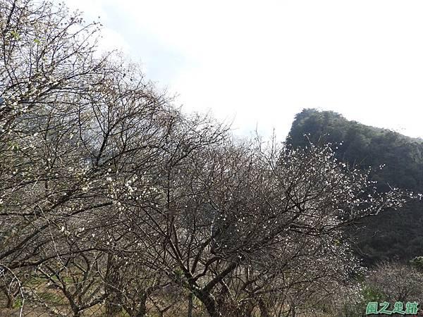 眉原梅緣20190112(30)