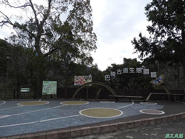 巴陵山櫻花20190127(29)