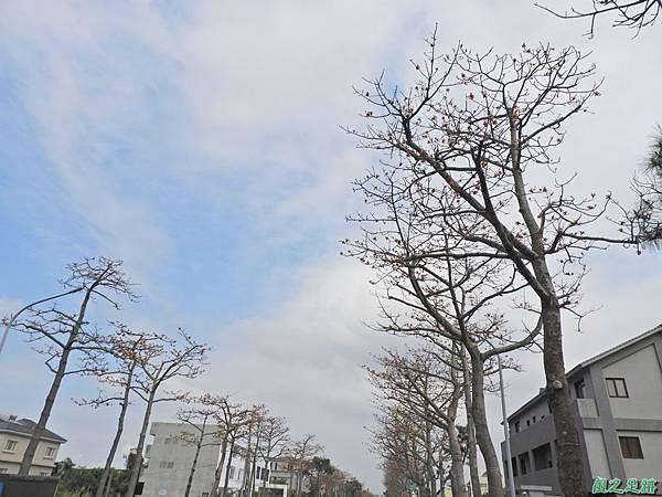 中大木棉道20190405(29).JPG