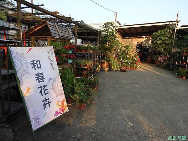 溪海紫藤花20190405(30).JPG