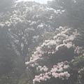 合歡山杜鵑花季(45).JPG