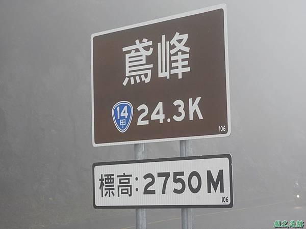 合歡山杜鵑花季(89).JPG