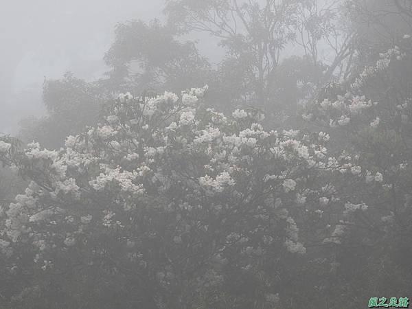 合歡山杜鵑花季(88).JPG