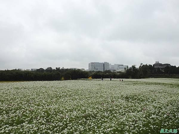 花彩節%5C平鎮場20191117(20).JPG