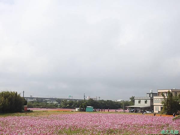 花彩節%5C平鎮場20191117(56).JPG