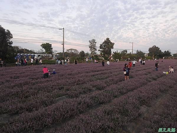 楊梅仙草花節20191124(84).JPG