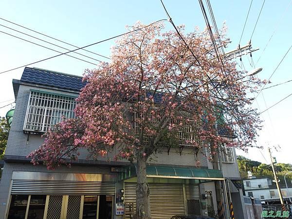 美人樹20191208(19).JPG