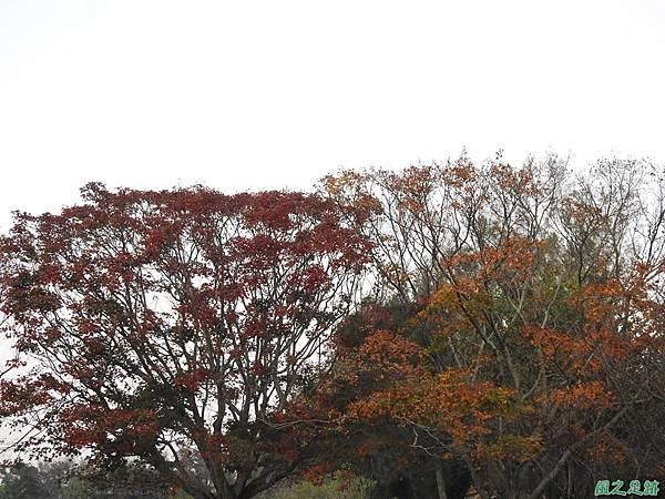 北資局楓紅20191215(4).JPG