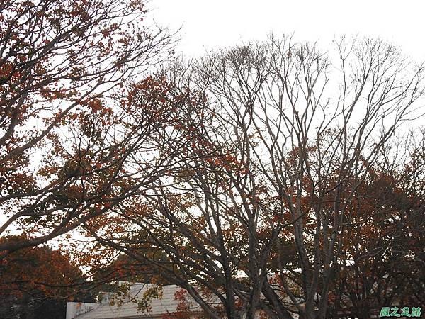 北資局楓紅20191215(8).JPG