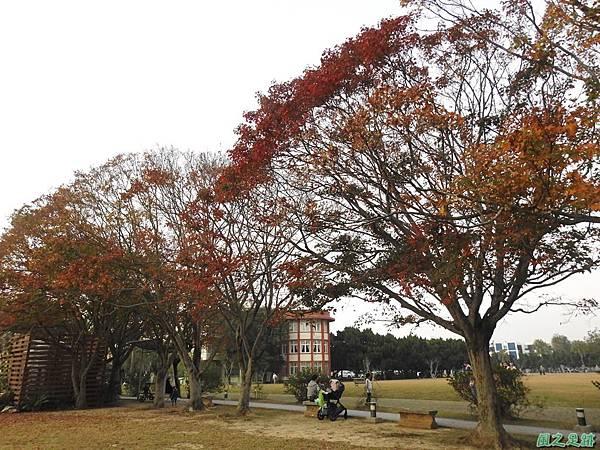 北資局楓紅20191215(13).JPG