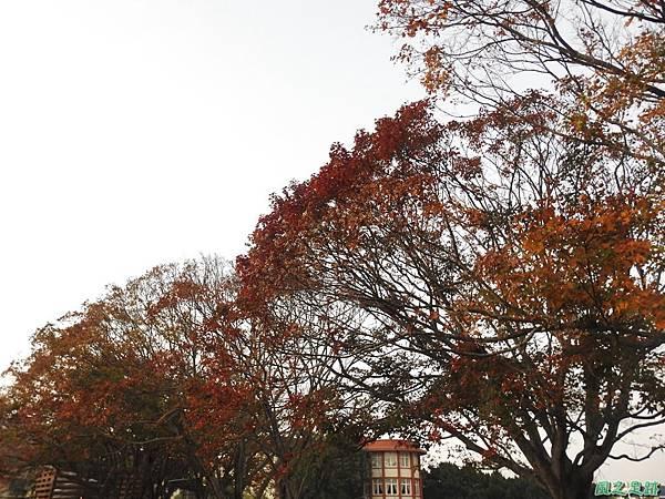 北資局楓紅20191215(16).JPG