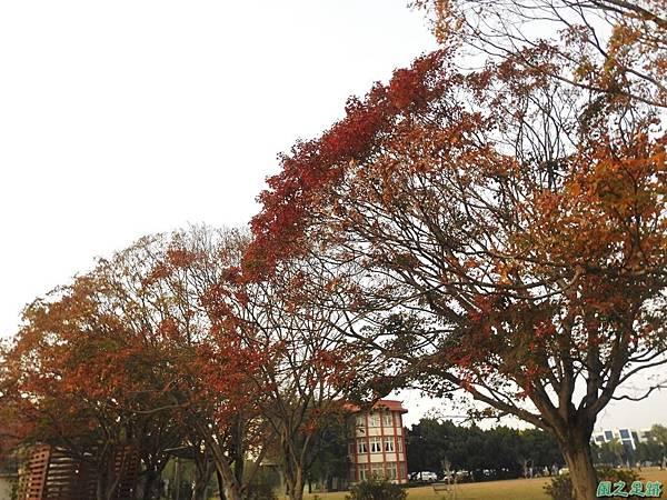 北資局楓紅20191215(21).JPG