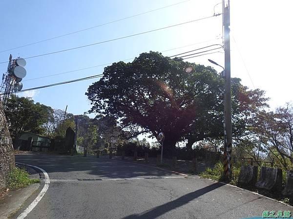 德文村百年雀榕老樹20200208(1).JPG