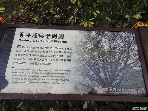 德文村百年雀榕老樹20200208(20).JPG