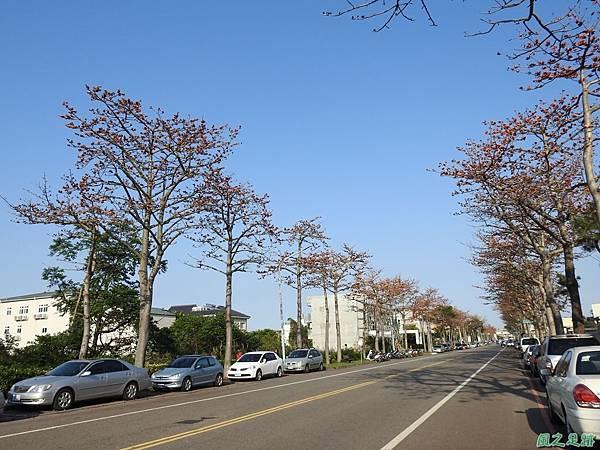 中大木棉道20200316(25).JPG
