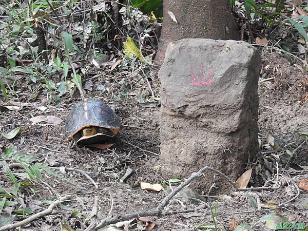 食蛇龜20200418(6).JPG