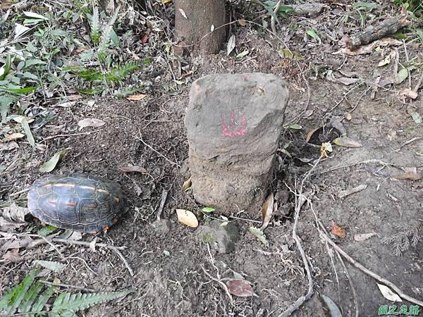 食蛇龜20200418(23).JPG