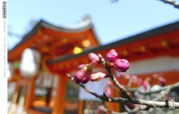 旅居日本:宇治走一天 a day in Uji