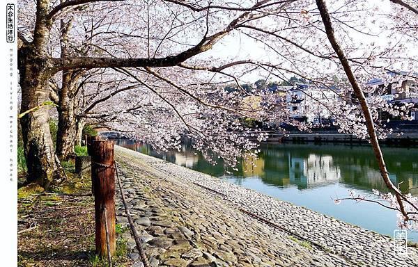 旅居日本:宇治賞花悠閒