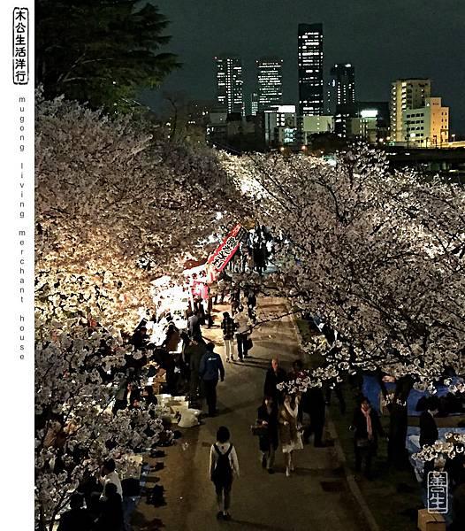 旅居日本:天滿橋河畔夜櫻賞 Tenmabashi riverside 4 sakura