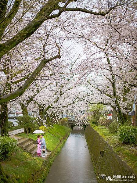 旅居日本:借看美景 sakura shot on a rainy day