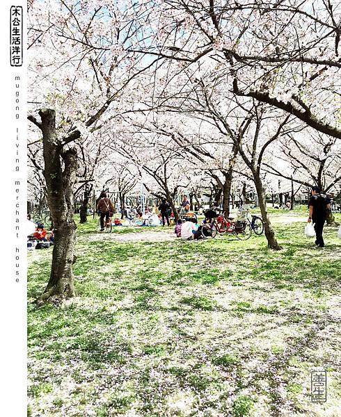 旅居日本:櫻花樹下坐看紛飛 relax under flying petals