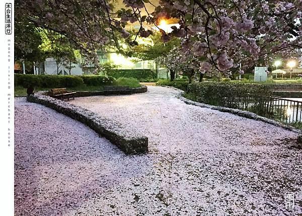 旅居日本:雨製櫻花地毯 sakura carpet