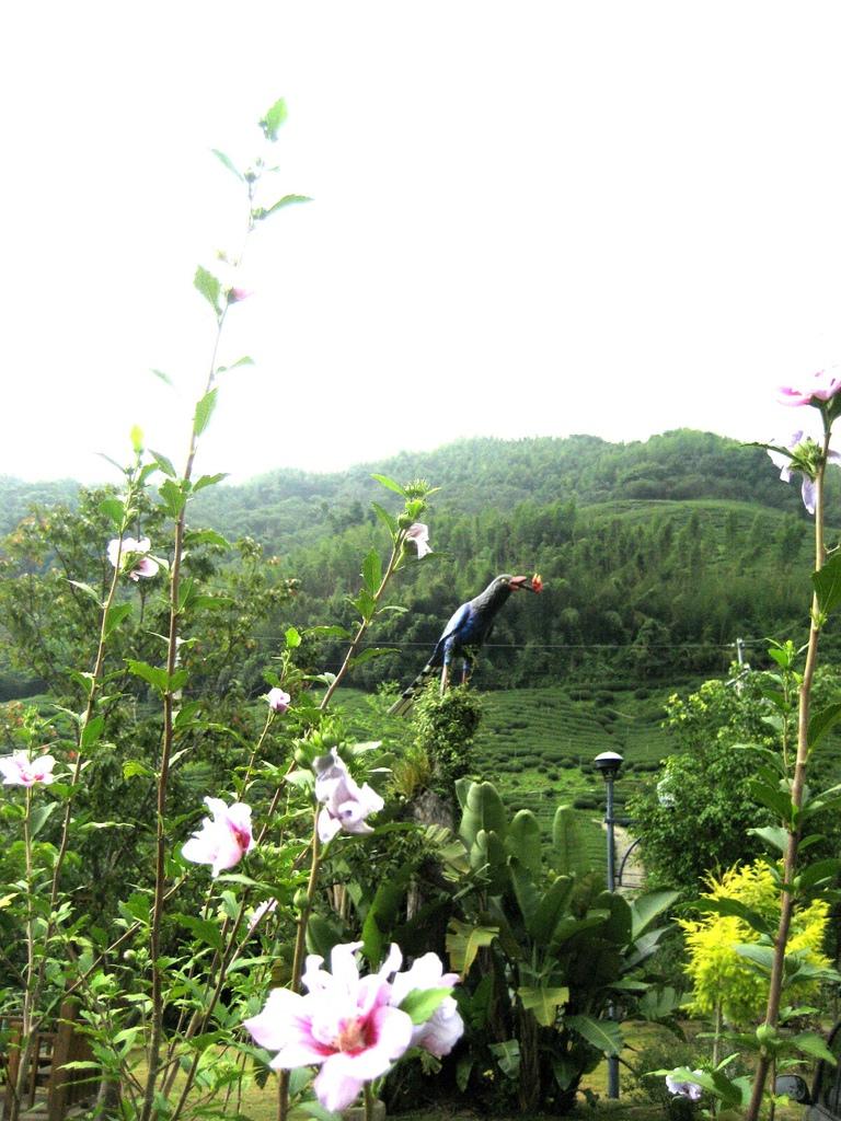 【MUJO趴趴走--國內旅遊】鄒遊阿里山私訪秘境.先來認識阿里山12村.文化特色.鄒族祭典.伴手禮...