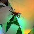 【MUJO趴趴走--國內旅遊】2012.11.18五股區農會(四健會)九湖休閒農場 杭菊生態解說.客家大院 認識客家文化.苗栗區農業改良場(分享我們ㄉ故事.內附一日遊行程)