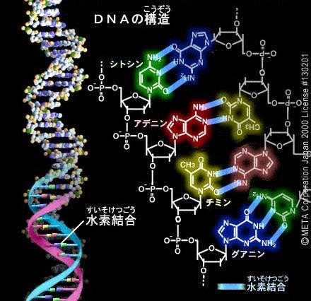 DNA-1.png