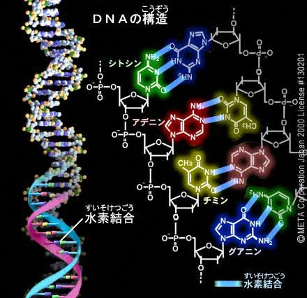 DNA-1.png