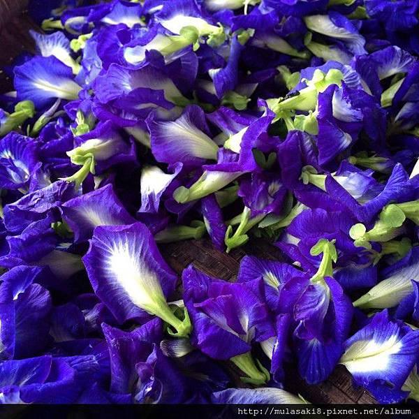 BlueChaiTea-DriedButterflyPeaFlowers-BlueTeaFlower81_zpsb75e95aa.jpg