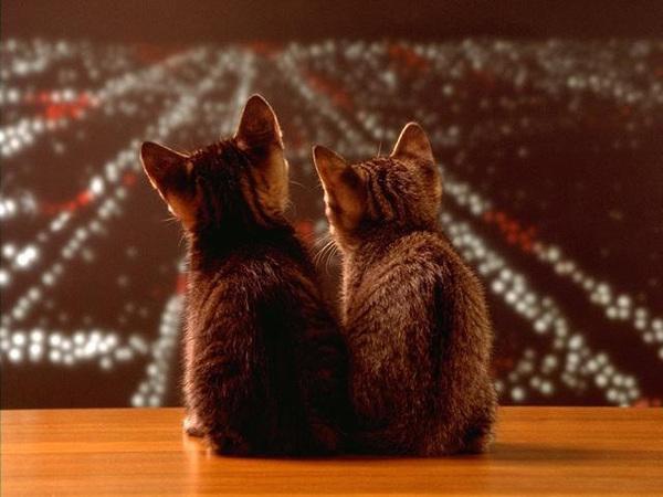 甜蜜的貓咪