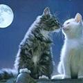 相親相愛的貓咪