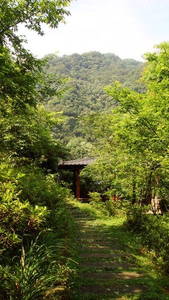 大板根-086-登山步道.JPG