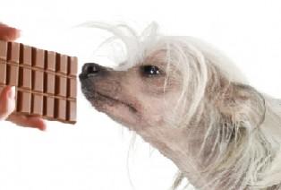 dog-sniffing.jpg