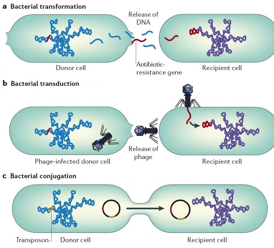 Horizontal-Gene-Transfer-in-Bacteria-Furuya-et-al