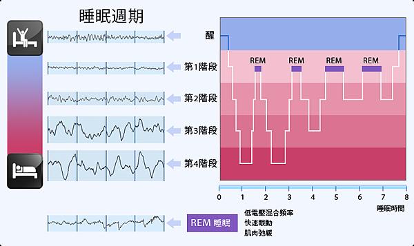 dia-sleep cycle.png