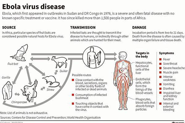 Ebola-Virus-Graphic