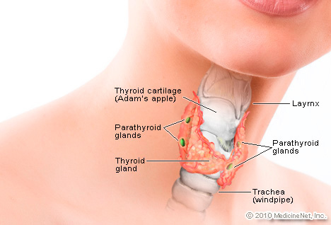 detail_thyroid2.jpg