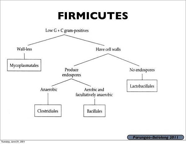 firmicutes-ec789cca-34f4-456f-b052-8dac9323718-resize-750.jpeg