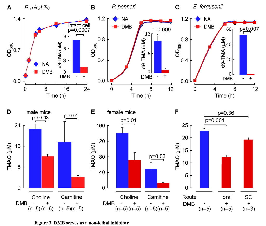 Non-lethal inhibition of gut microbial trimethylamine production for the treatment of atherosclerosis_頁面_18.jpg